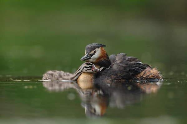 Shangrala's Animal Moms 7