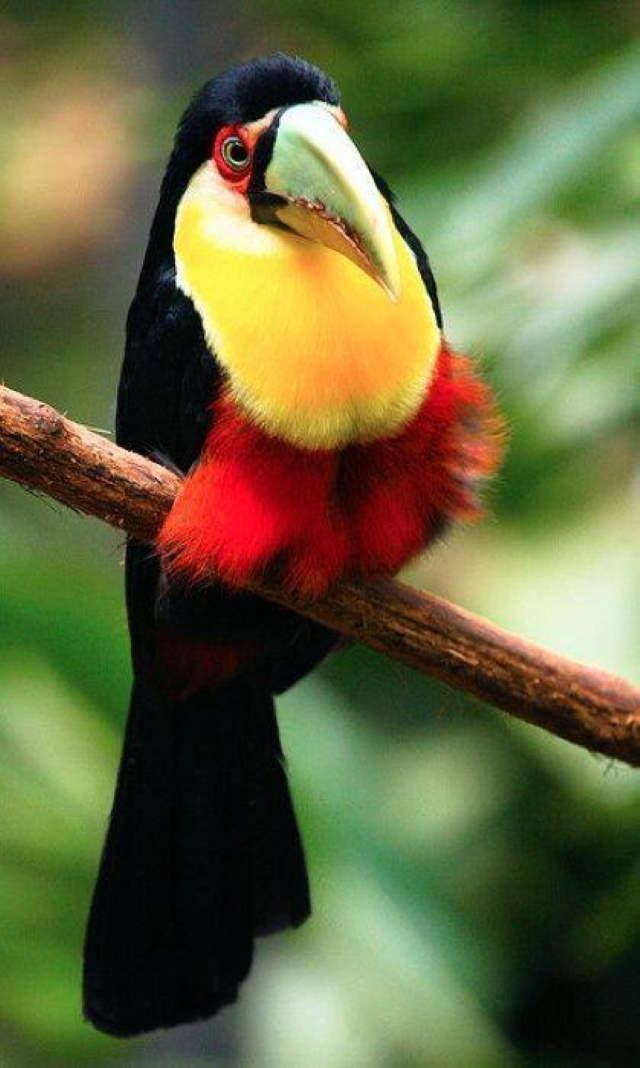 Shangrala's Colorful Birds 4