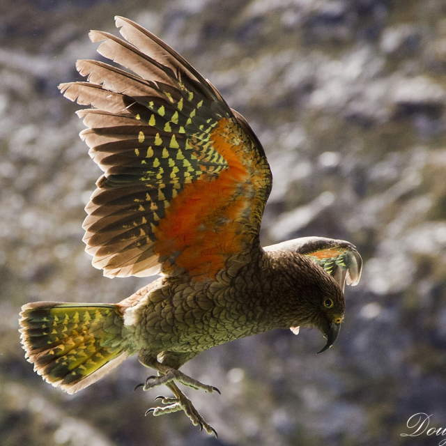 Shangrala's Beautiful Exoctic Birds