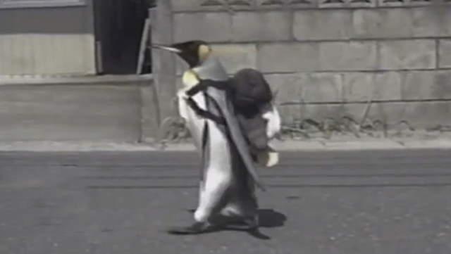 Shangrala's Lala The Penguin