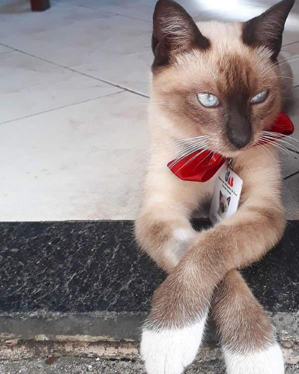 Shangrala's Leon The Watchcat