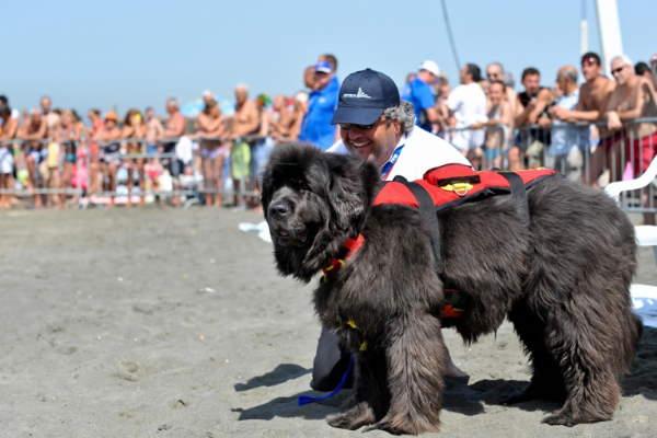Shangrala's Italy's Lifeguard Dogs