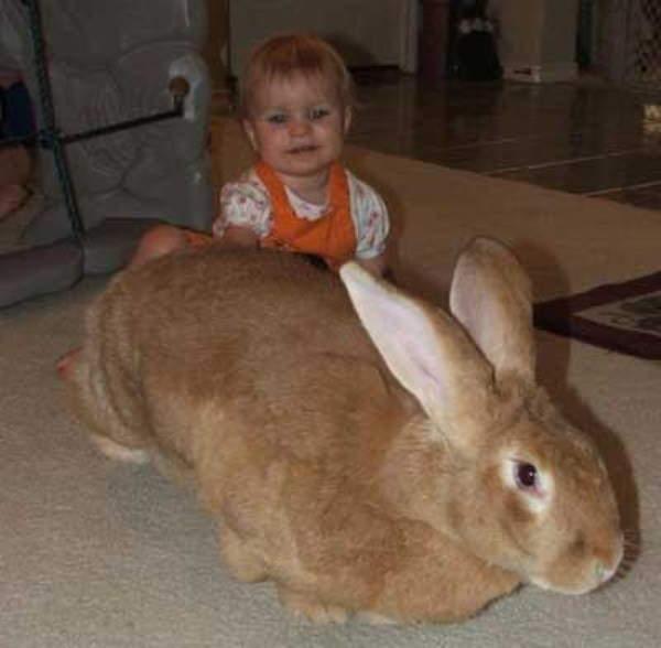 Shangrala's Big Beautiful Rabbits