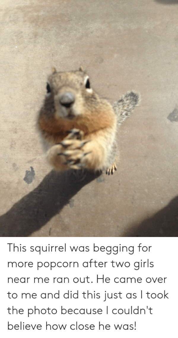 Shangrala's Begging Squirrels