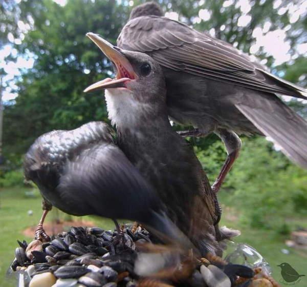 Shangrala's Bird Feeder Birds