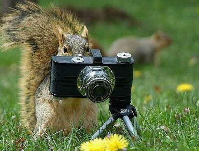 Shangrala's Budding Photographers 3