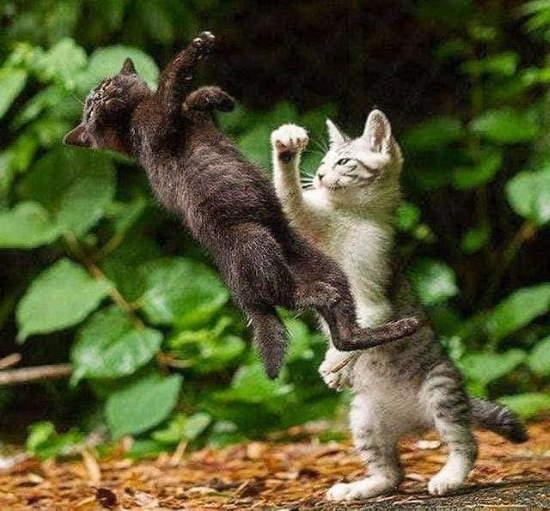 Shangrala's For Cat Lovers