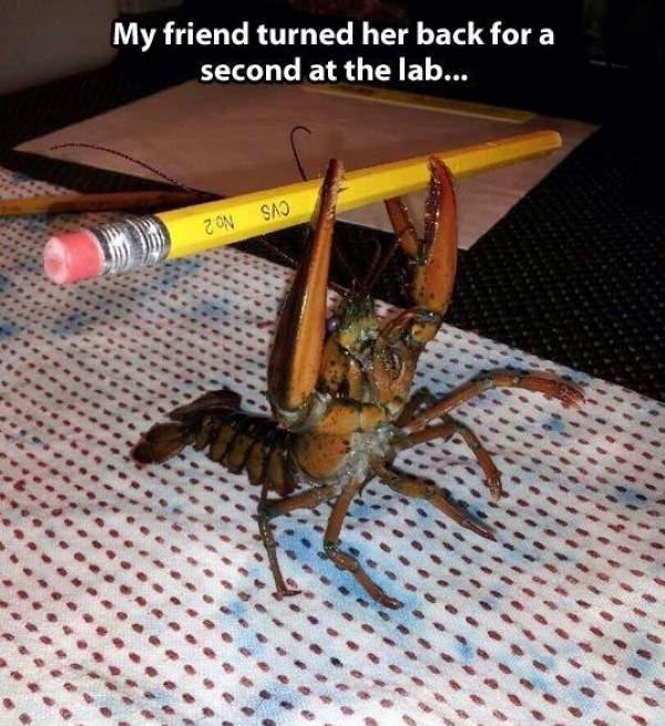 Shangrala's Funny Crabs