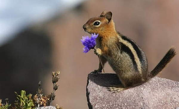 Shangrala's Squirrels With Flowers