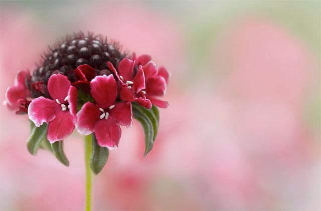 Shangrala's Vivacious Exotic Flowers