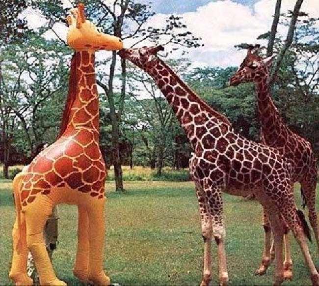 Shangrala's Aww Animals 2