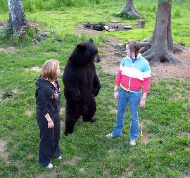 Shangrala's Wild Bear Farm