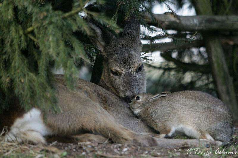 Shangrala's Bambi with Thumper