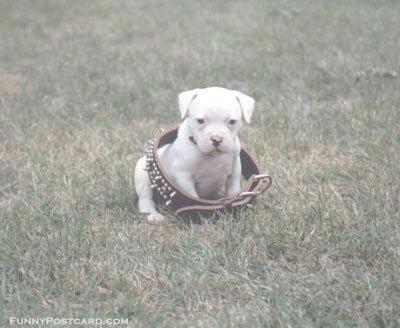 Shangrala's Why God Gave Us Pets