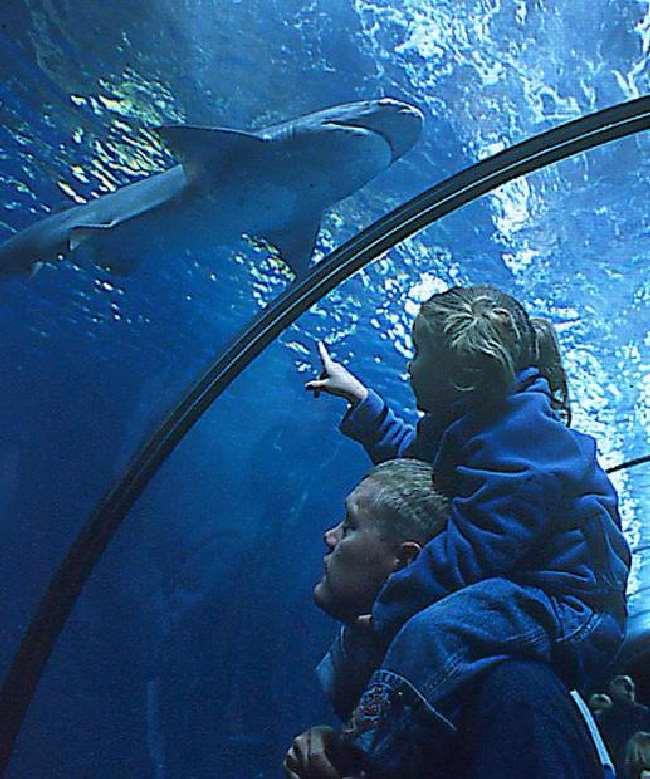 Shangrala's Oregon Coast Aquarium