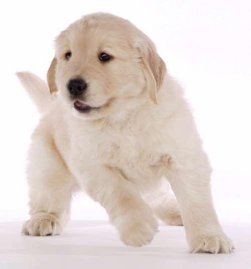 Shangrala's Get A Dog