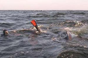 Shangrala's Whale Rescue