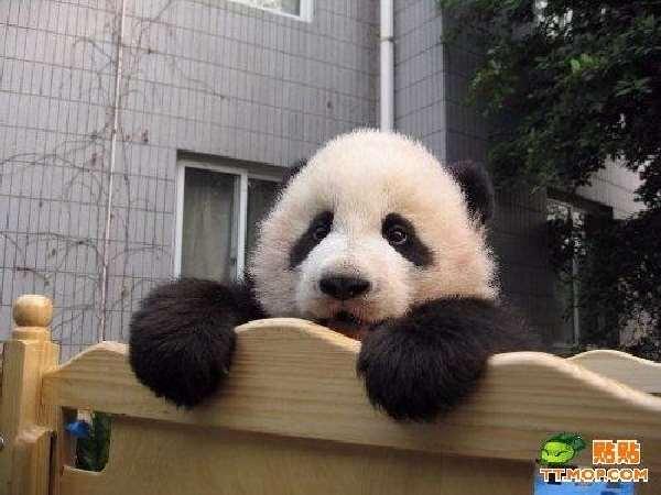 Panda dating site