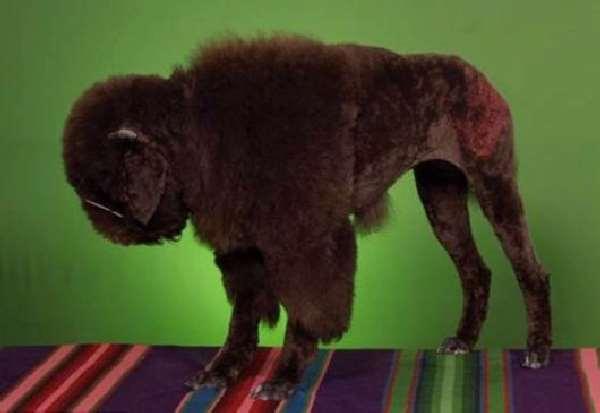 Chow Tiger Shangralafamilyfun.com - shangrala's china's craze for dogs ...Lion Family