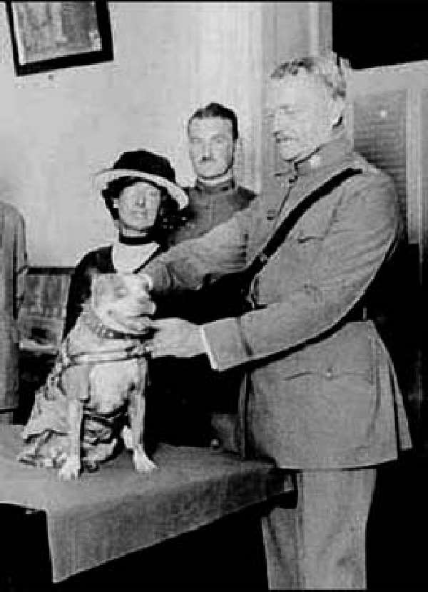 Shangrala's                                                           Sgt. Stubby                                                           War Dog Hero