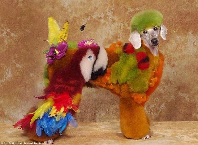 Shangralafamilyfun Com Shangrala S Extreme Dog Grooming