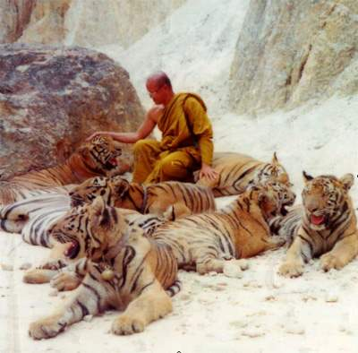 http://www.shangralafamilyfun.com/2013/tiger0.jpg