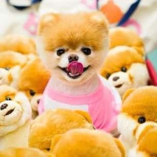 Shangralafamilyfun Com Shangrala S Newsworthy Animals