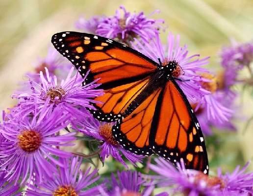 3632a511cef0f5 ShangralaFamilyFun.com - Shangrala s Beautiful Butterflies!
