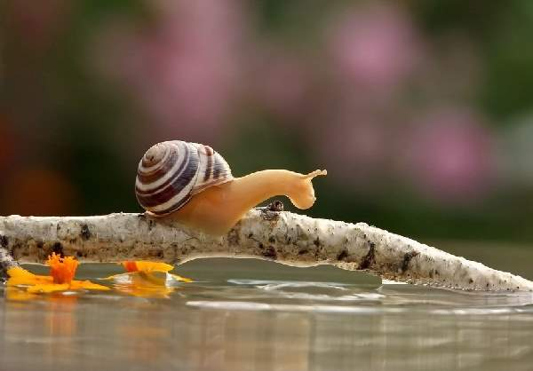 Shangrala's Magical Tiny Snails