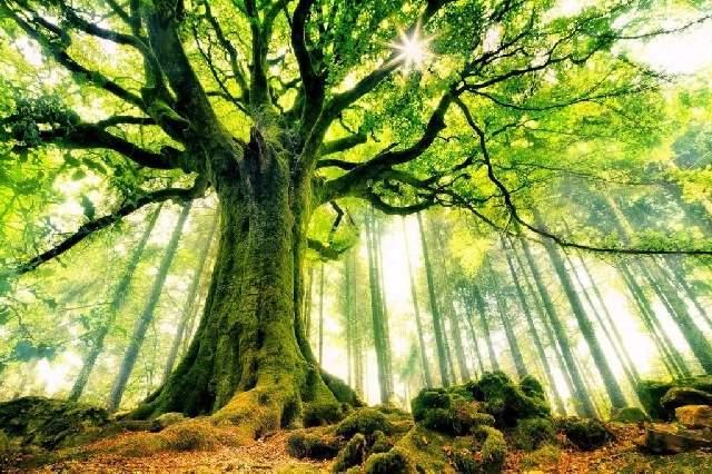 Shangralafamilyfun Com Shangrala S World S Beautiful Trees