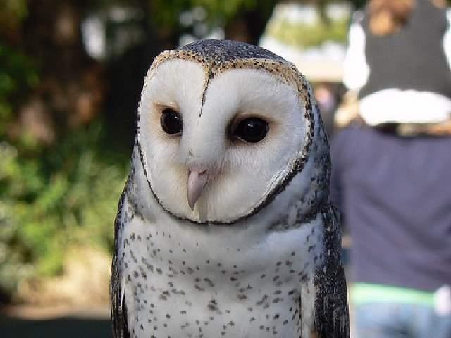 Shangralafamilyfun Com Shangrala S Cute Australian Wildlife