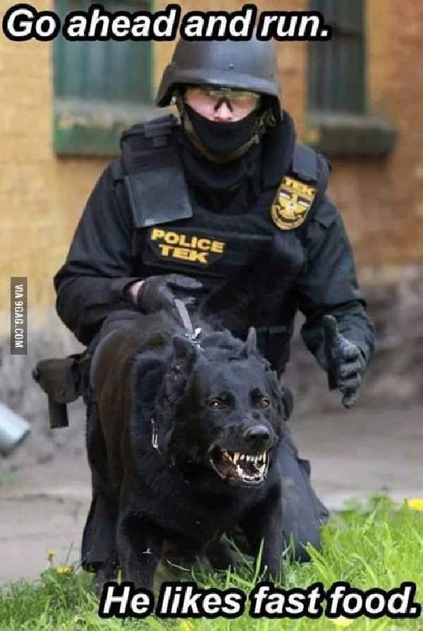 Shangrala's Police Dogs