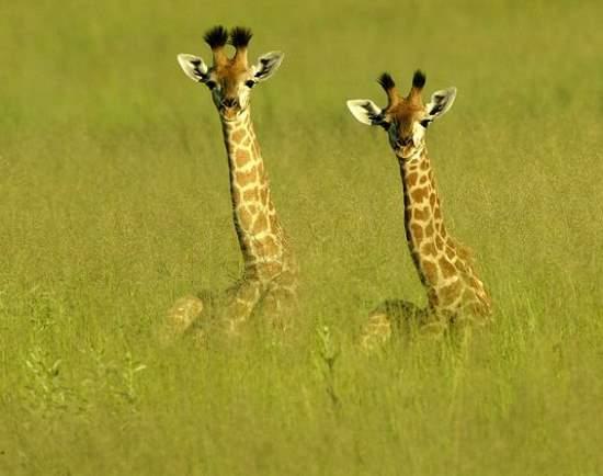 Shangrala's Sweet Baby Animals!