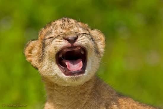 Shangrala's Sweet Baby Animals 2!