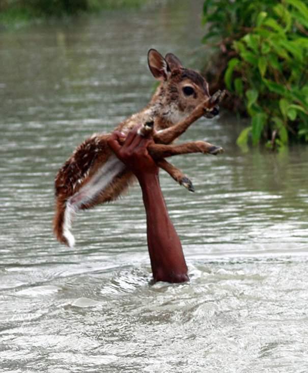 Shangrala's Deer Rescue 2