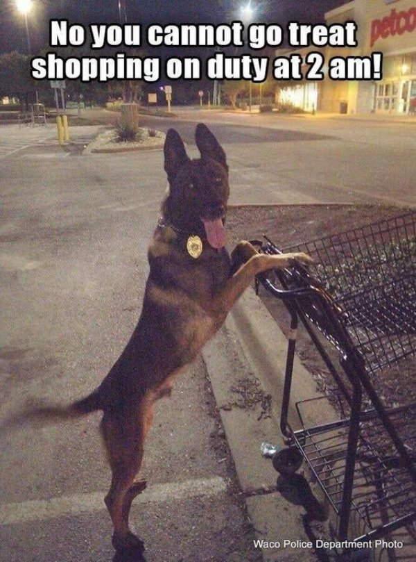 Shangrala's Police Dogs 3