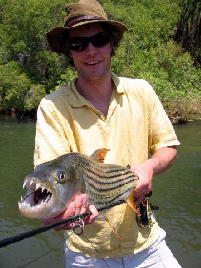 Hot video goliath tigerfish for Tiger fish pictures